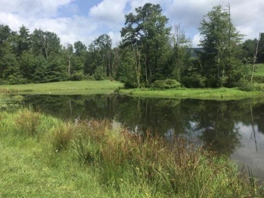 Hartman Center Pond